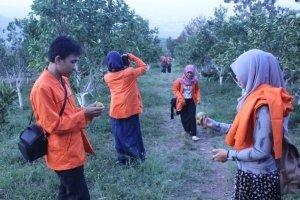 Suasana petik buah jeruk di kebun buah jeruk Kusuma Agrowisata